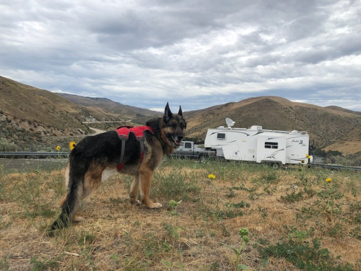 3 Dangers Of RVing With Dogs That Are Totally Preventable