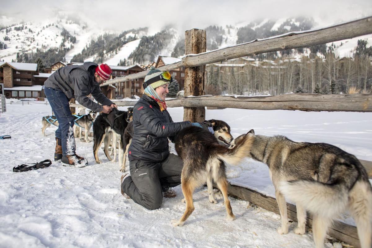 New business offers sled dog tours in Jackson Hole