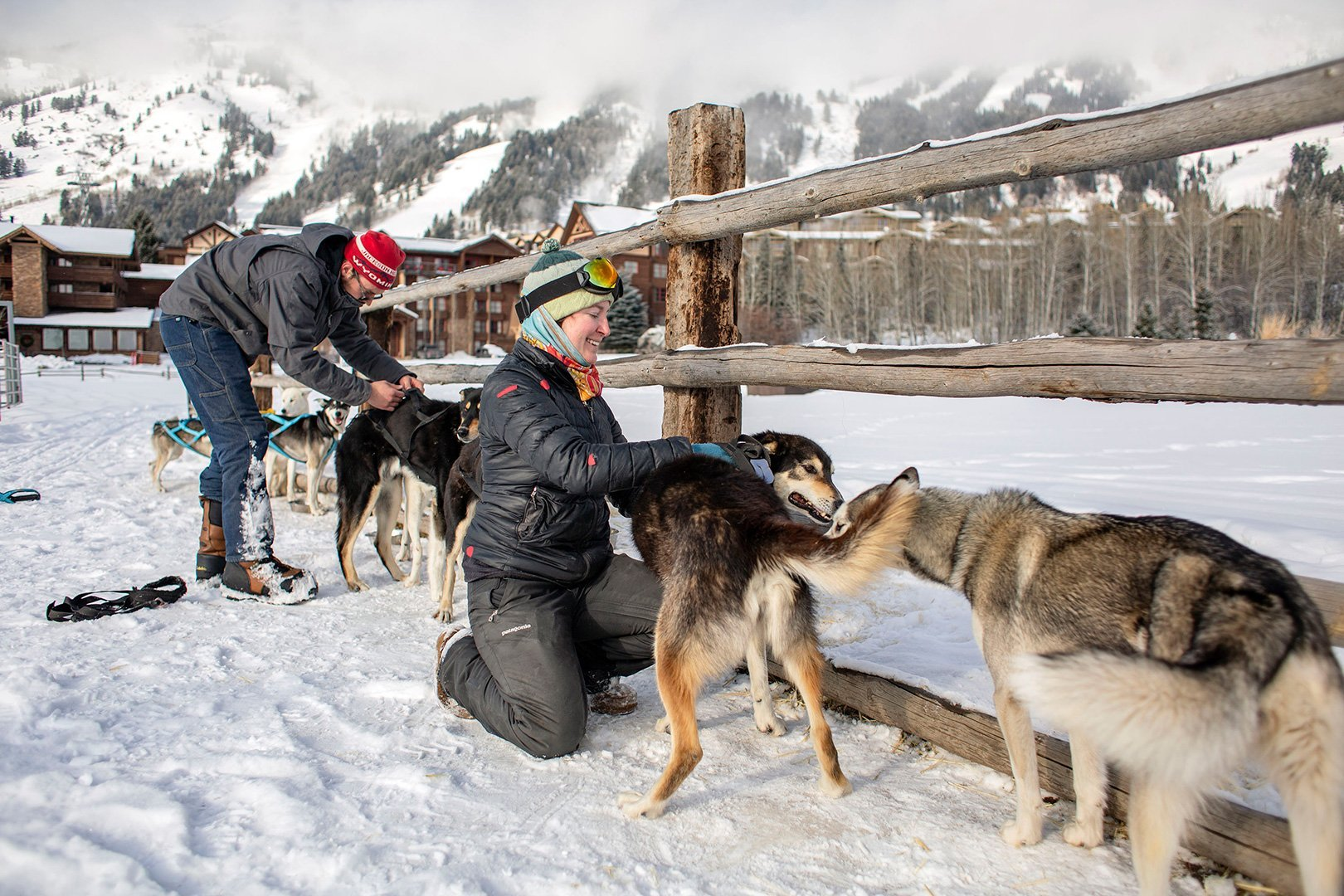 On the right track | New business offers sled dog tours in Wyoming