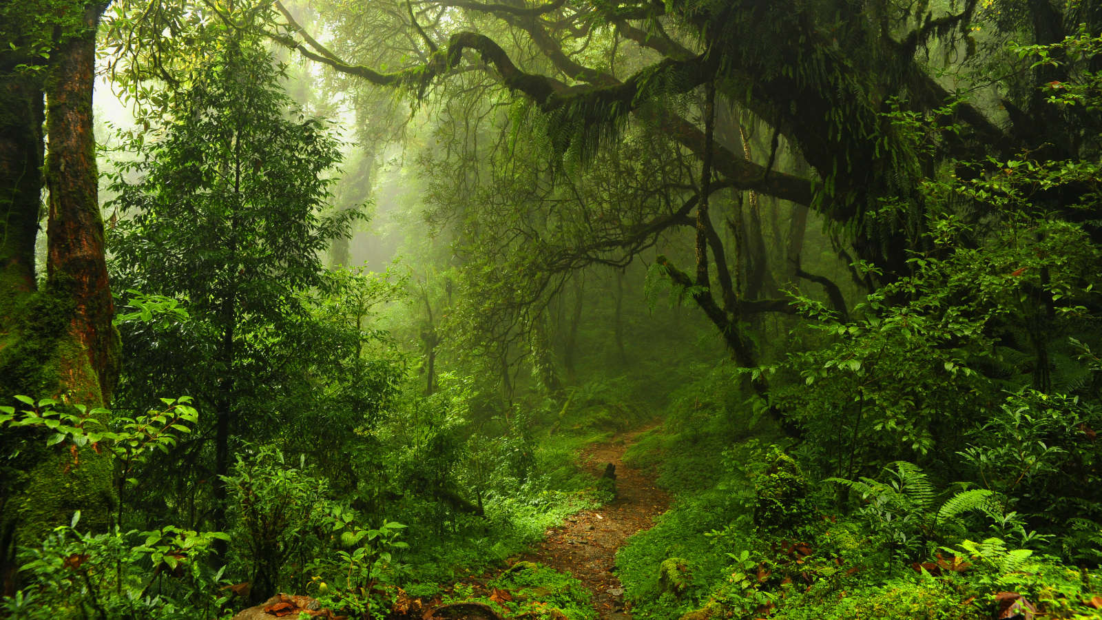 Listen to Forests From Around the World With Tree.fm
