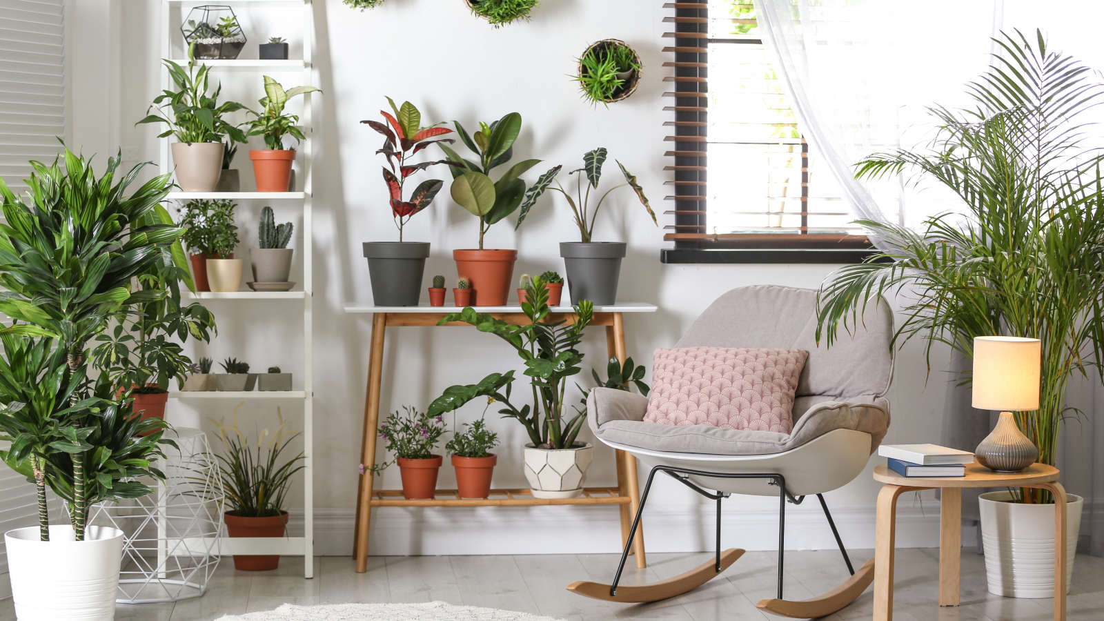 Get a Houseplant to Feel More In-Control of Your Life