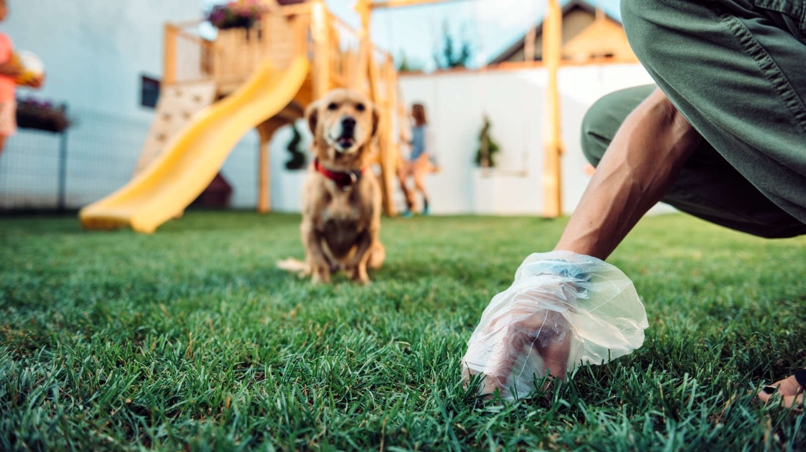 Use Compostable Dog Poop Bags, Not Biodegradable Ones