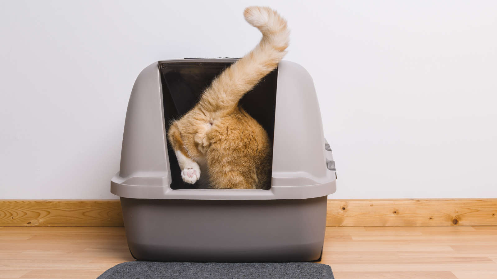 How to Make Your Cats Use the Freaking Litter Mat