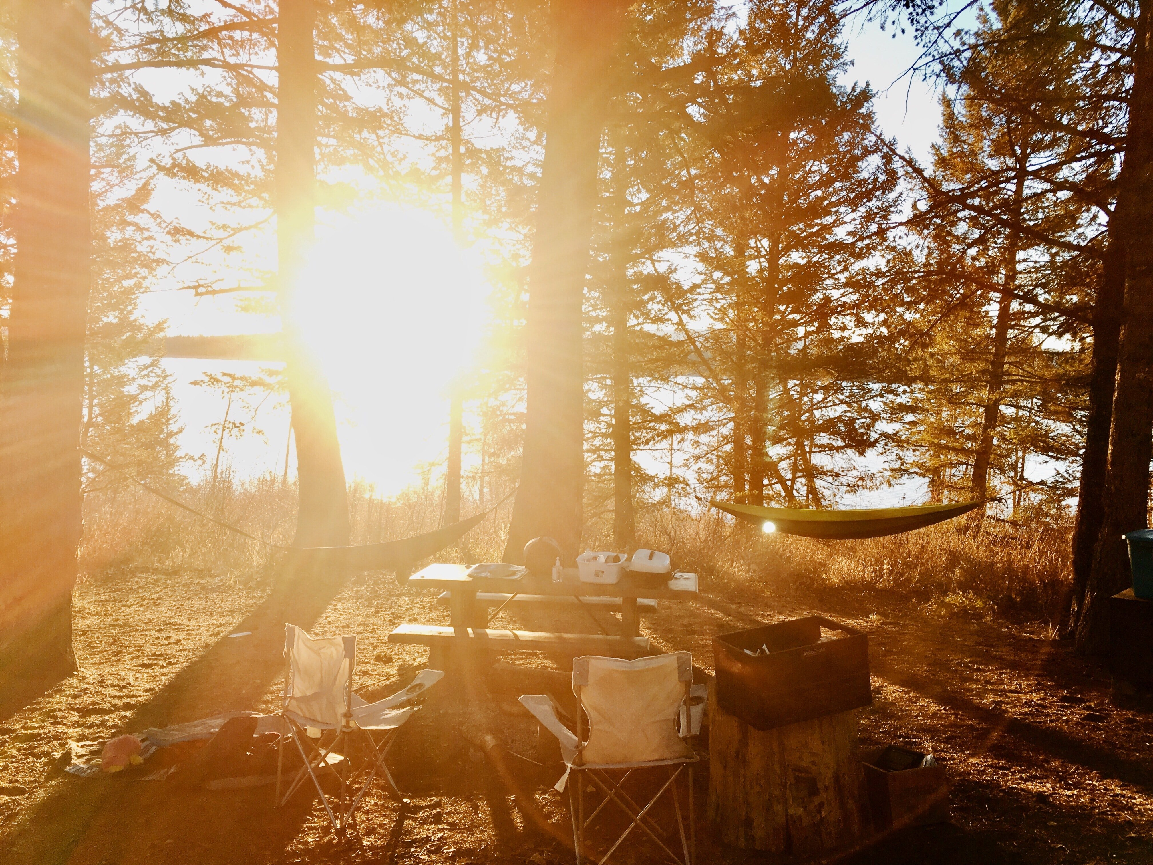 Wildlife Watching and RV Camping