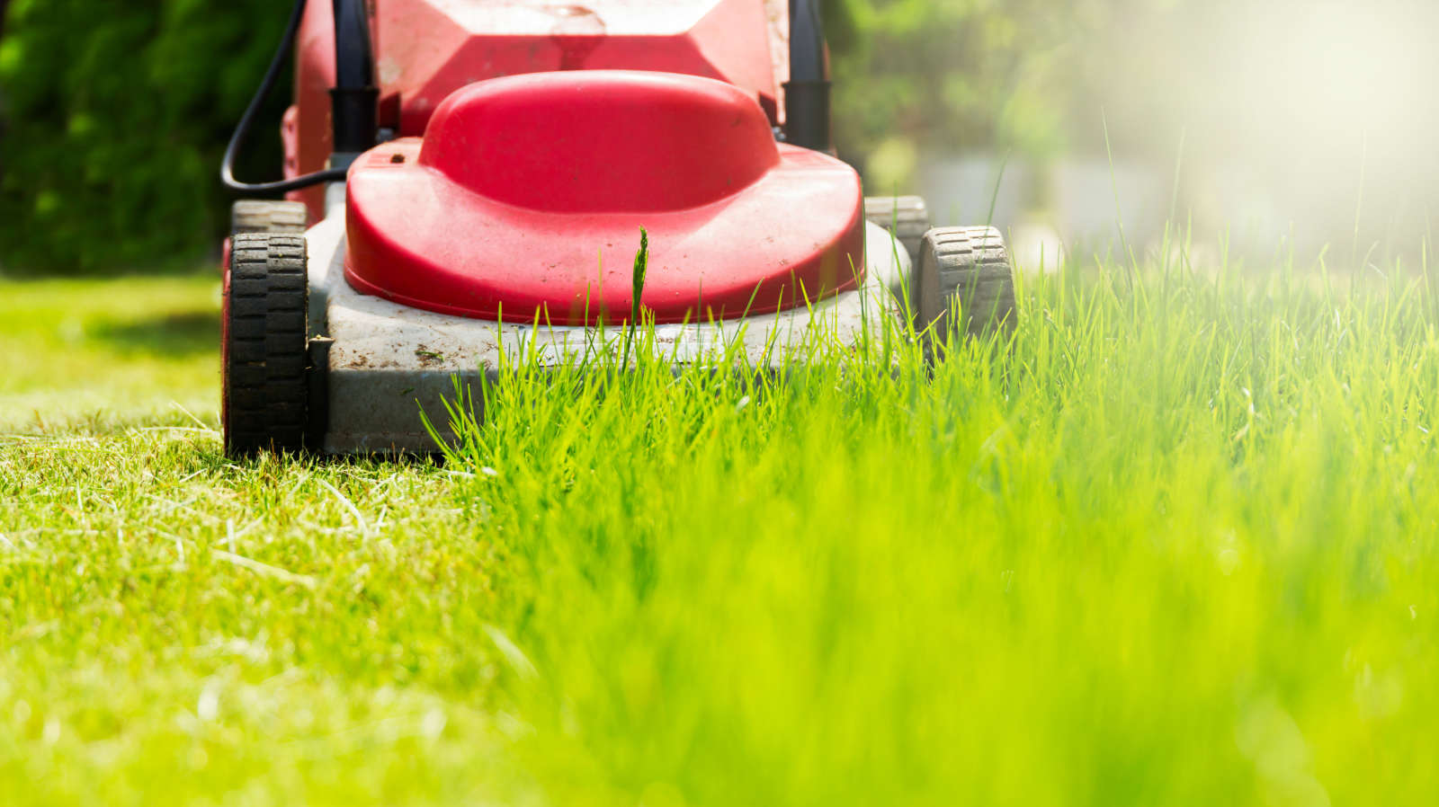 Why You Shouldn't Mow a Wet Lawn